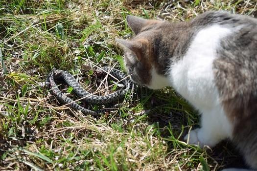 can cats sense snakes?
