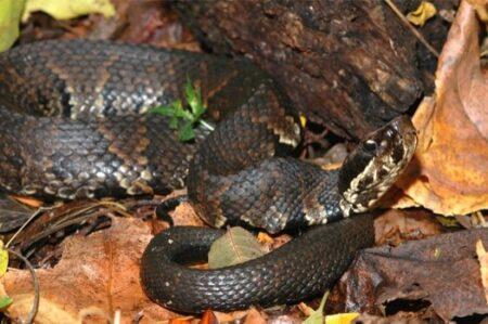 Are Snakes Vertebrates?