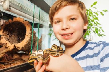 Ball Python Pet Care
