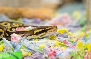 Common Health Problems in Snakes