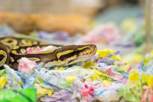 signs of ill health in snakes