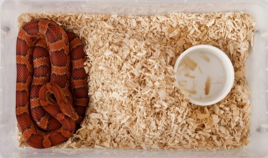 What are the best and worst pet snakes