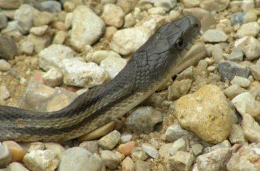 garter snake housing