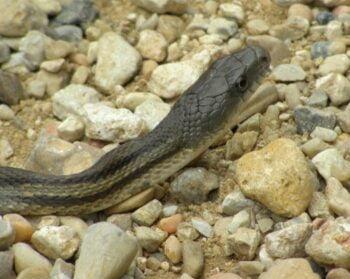 Garter Snake Enclosures