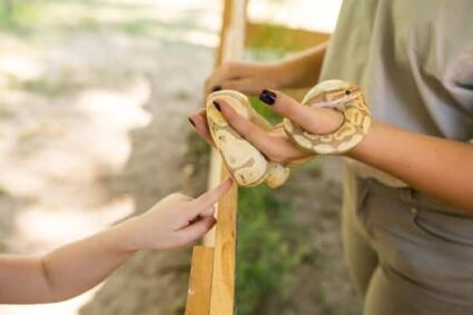 How Do Snakes Get Mites?