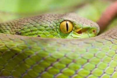 How Do Snakes Sleep without Eyelids?