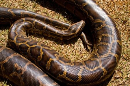 What's the price of a boa constrictor?