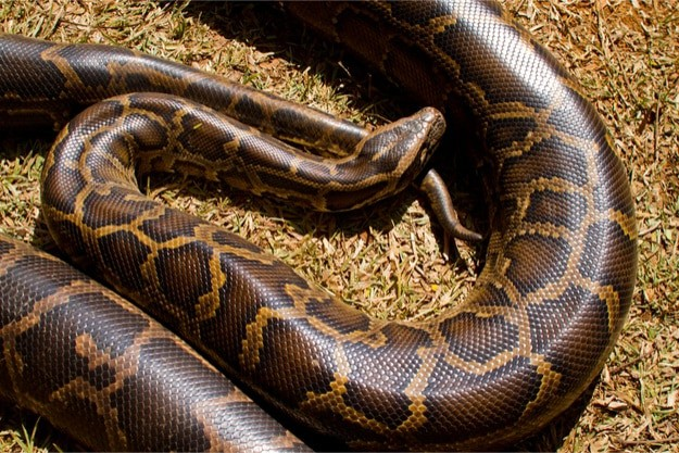 How Much Do Snakes Cost? — Snakes for Pets