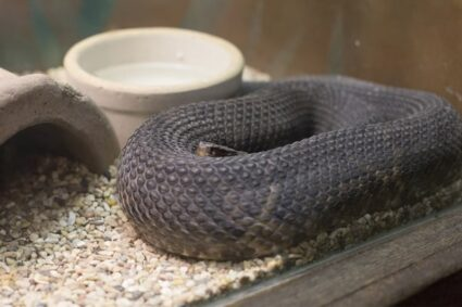 How to Keep a Snake Warm without Heat Lamp