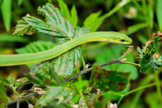 A complete guide to rough green snake care