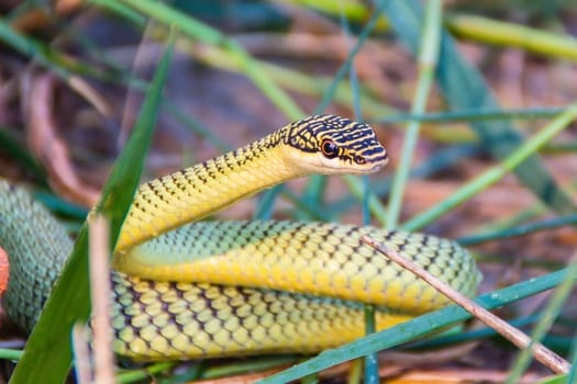 What's the best small snake for a pet?