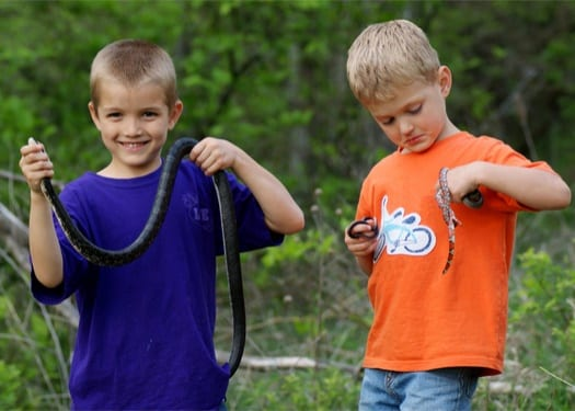 are there such a thing as vegetarian snakes?