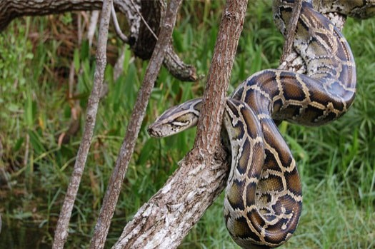 are snakes deaf or blind?