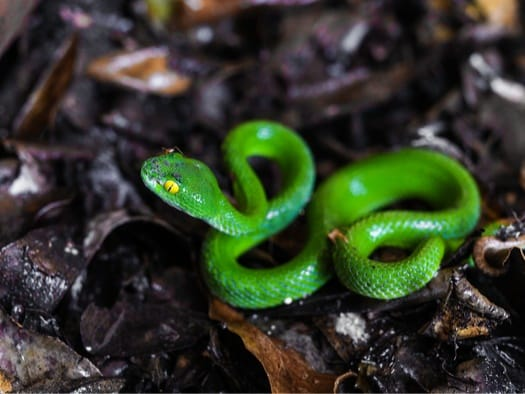 what time of year do snakes have babies?