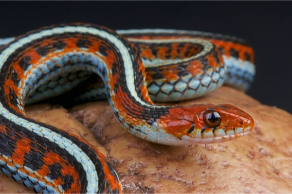 Top 3 Garter Snake Enclosures (with Sizing and Setup