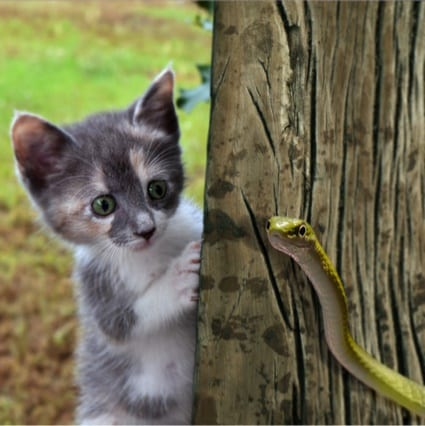 Are cats immune to snake bites?