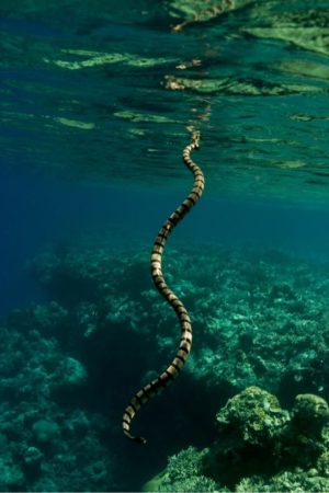 do snakes drown if they bite underwater?