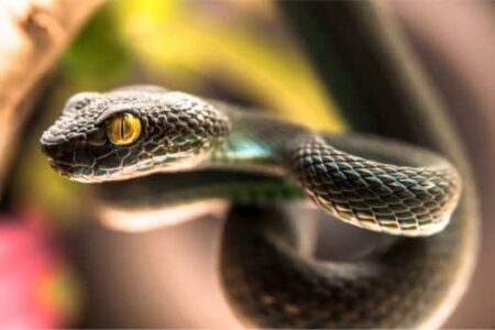 do snakes have movable eyelids?