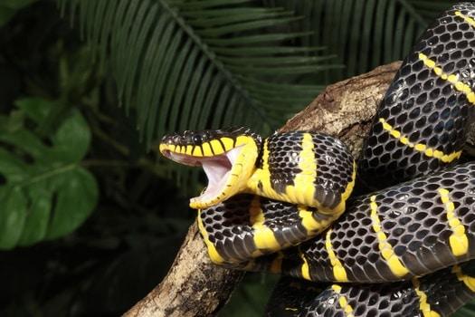 do snakes teeth retract?