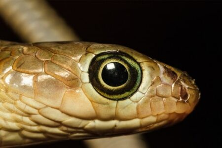 do snakes close their eyes?