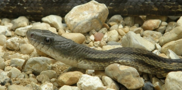 What is the Best Substrate for Garter Snakes? — Snakes for Pets