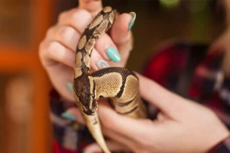 can ball pythons see in the dark?