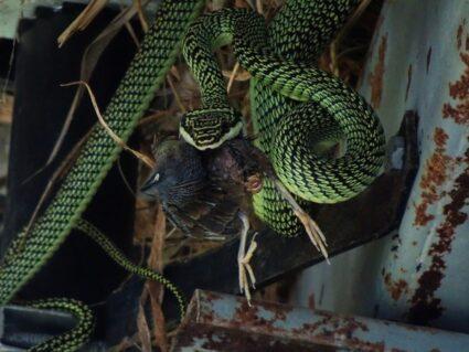 How do snakes get rid of bones?