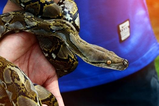 When should I clean my pet snakes' terrarium?