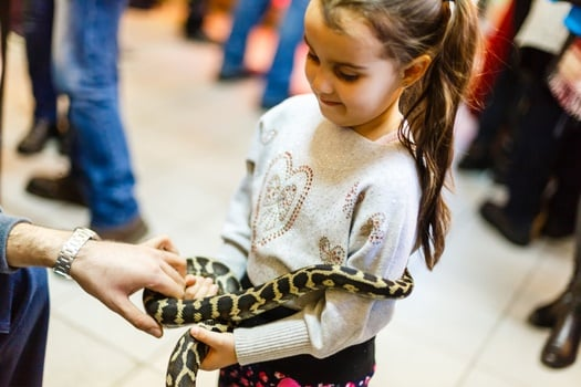 What is the friendliest snake?