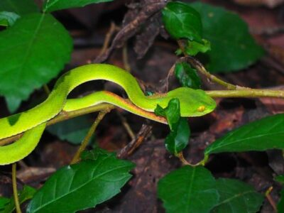 snake movement types