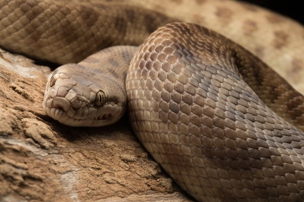 can snakes get sick from humans?