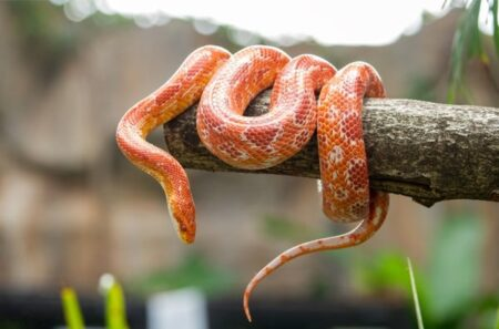 what does it mean when a snake shakes its tail?