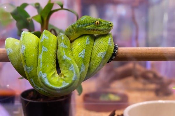 male vs. female snake temperament