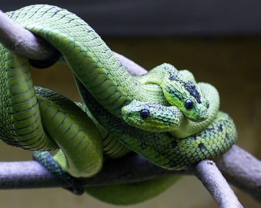 Which Snakes Can Be Housed Together? — Snakes for Pets