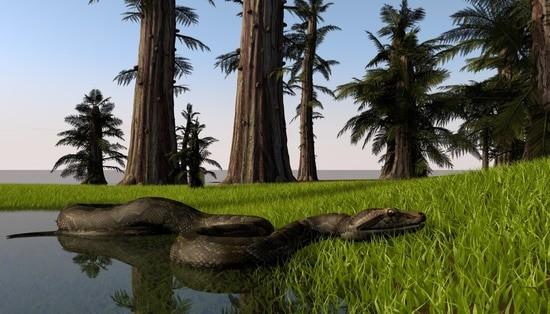 law on Burmese pythons in Florida