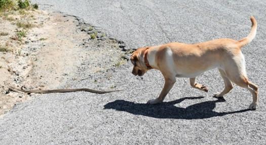 will a snake bite kill a dog?