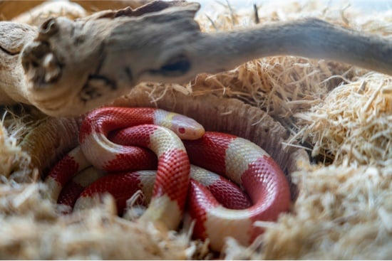 Can I use a heat rock for my snake?