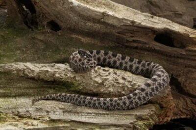 Dangerous Snakes in Florida