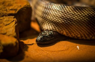 Deadliest Snakes in the World