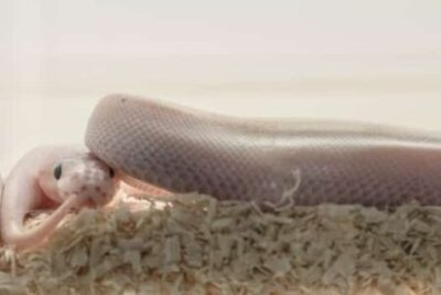 How to reduce a snake tank's humidity
