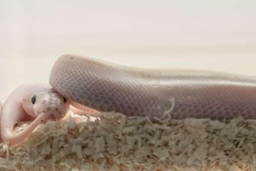 why do snakes need humidity?