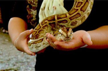 Pet Snake Aggressive