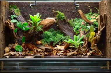 Plants for a Snake's Terrarium