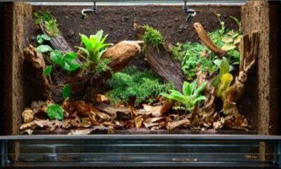 Plants for a Snake's Terrarium