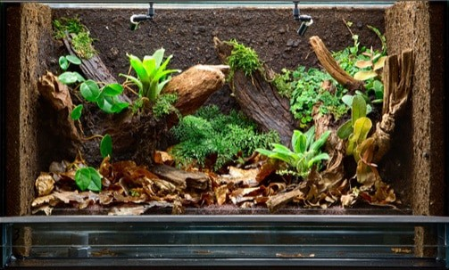 safe plants for snakes
