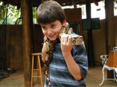 are boa constrictors dangerous as pets?