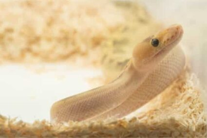 best pet snake bedding