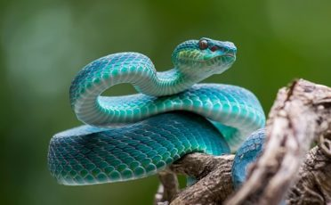 can snakes be poisoned by their own venom?
