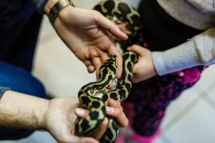 can stress kill a snake?