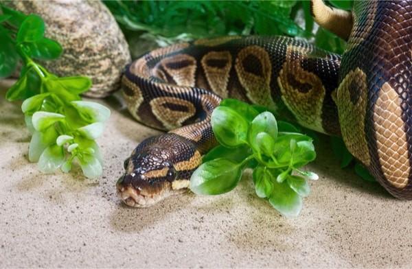 snake parasite treatment
